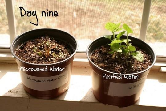 micro-ondes-plantes-jour-9-2