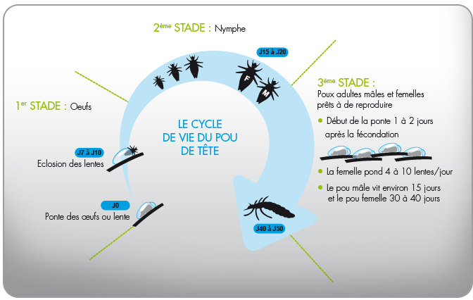 cycle_poux