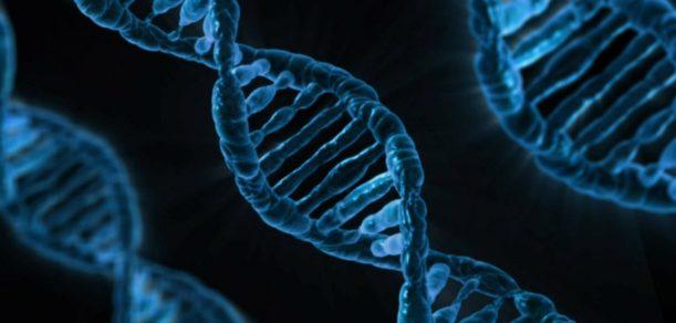 ADN_epigenetique_2